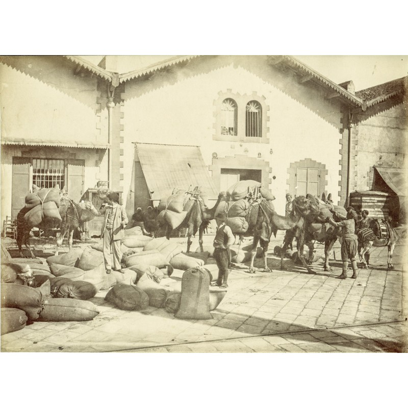 Historic Turkey. Views of  Smyrna (Izmir): Loading camel caravan. Original photography (approx. 1898).