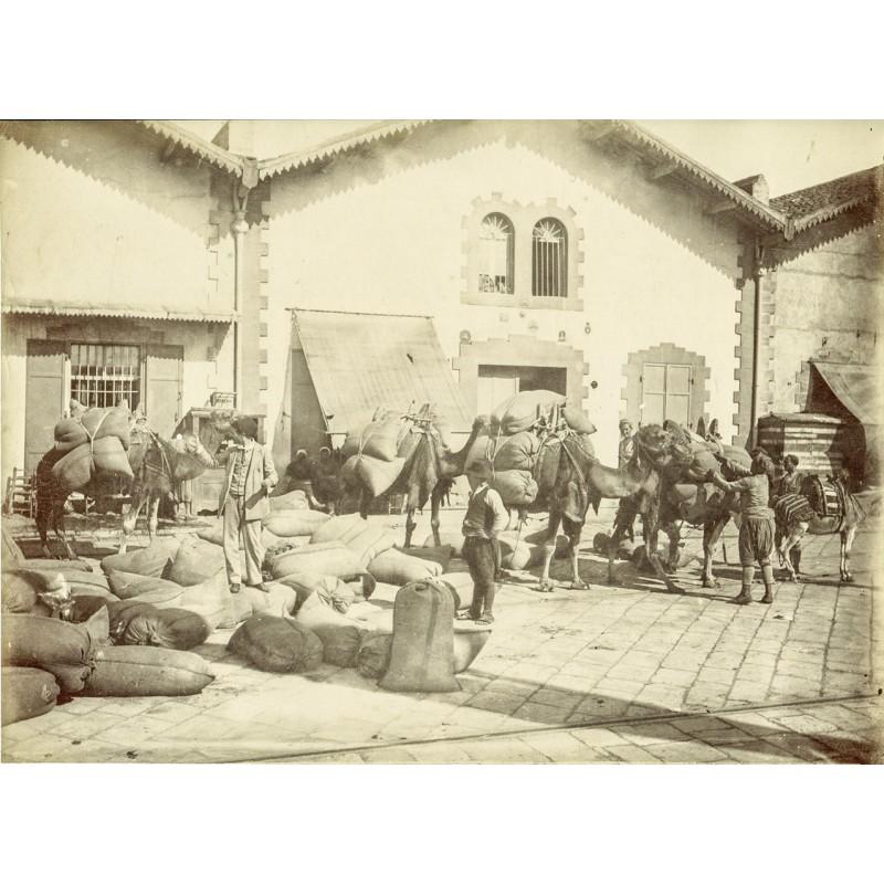Historische Fotografie mit Ansichten aus Smyrna (Izmir): Kamelkarawane wird beladen. Original Fotografie (ca. 1898).
