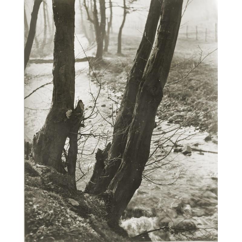 Paulus, Alfred: Naturstudie. Original-Fotografie (1950er Jahre)