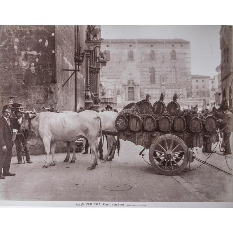 ANDERSON: Perugia. Xarro con buoi. Original photography. Albumen print (approx. 1890).